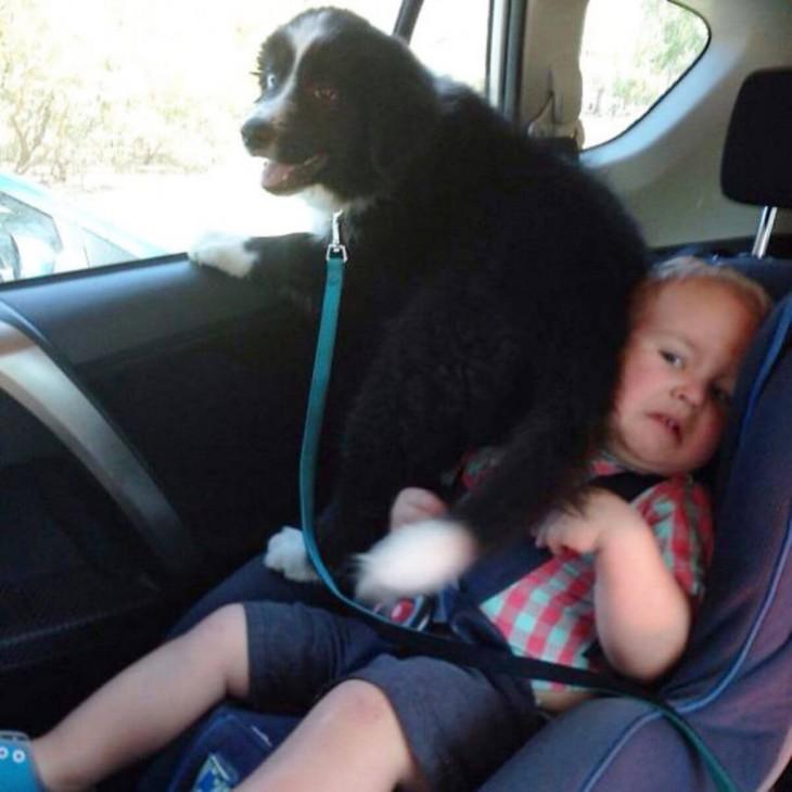 El perro quiere ir viendo por la ventana y se encima con el bebé que está cerca de ella