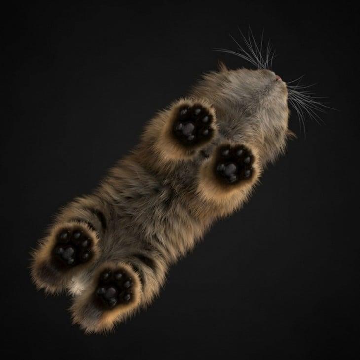 gato visto a traves de un cristal