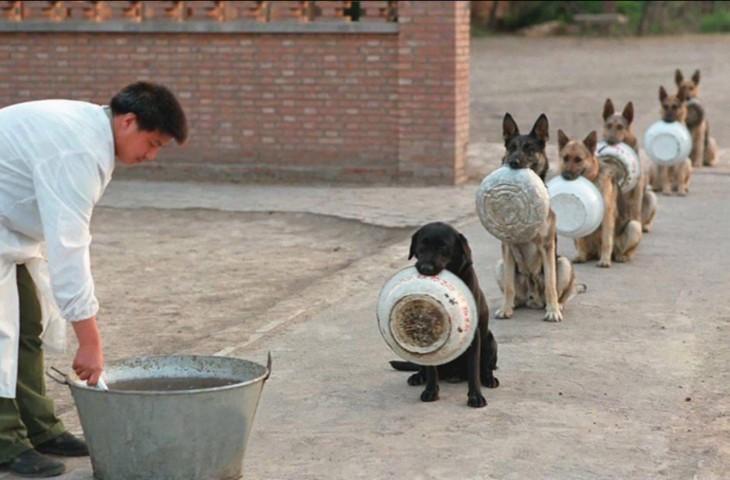 perros disciplinados en China
