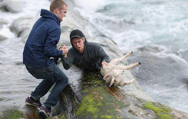 jovenes que salvan a una oveja del mar congelado