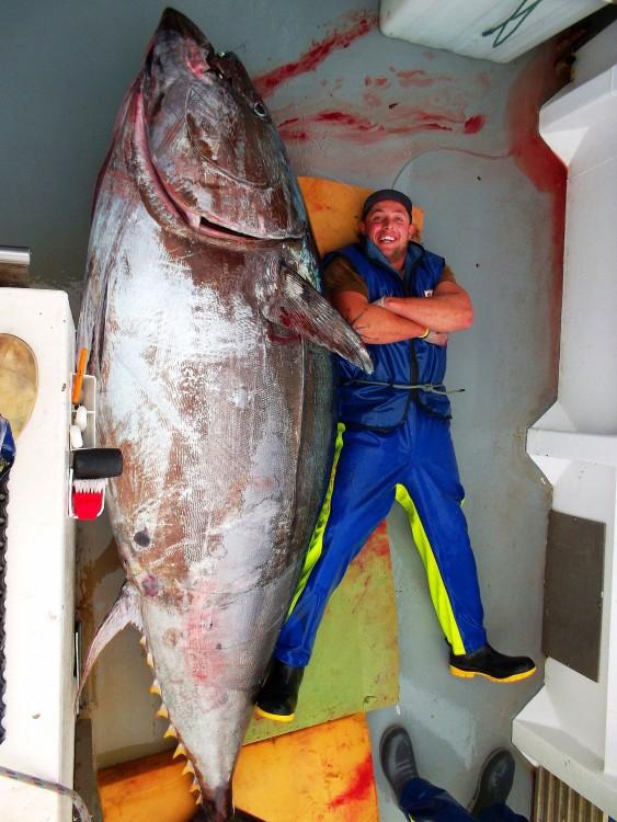Uno de los atunes más grandes del mundo