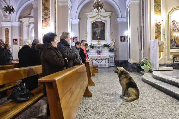 Tommy el perrito que murió en una iglesia de Italia esperando a su difunta dueña. Murió dos meses después de un paro cardíaco.