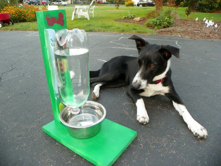 Perro acostado frente a un bebedero autorrellenable para el agua