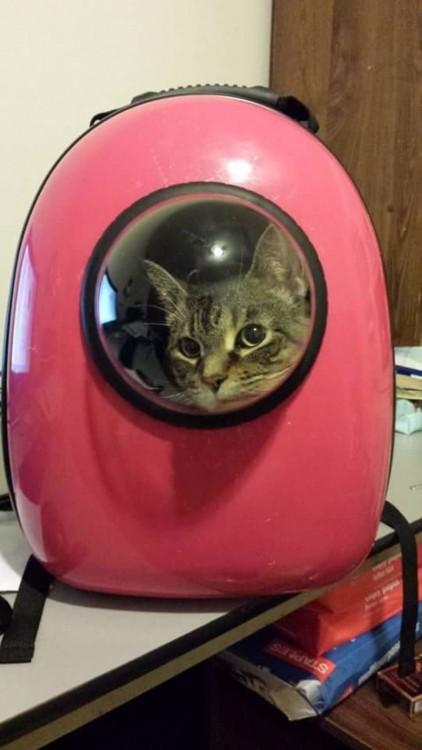 mochila rosa con un gato dentro