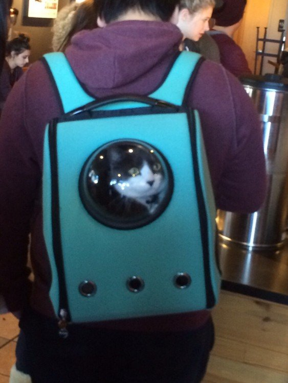 chico con una mochila de U-Pet cargando a su gato