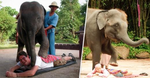 La nueva tendencia en masajes... pero con elefantes