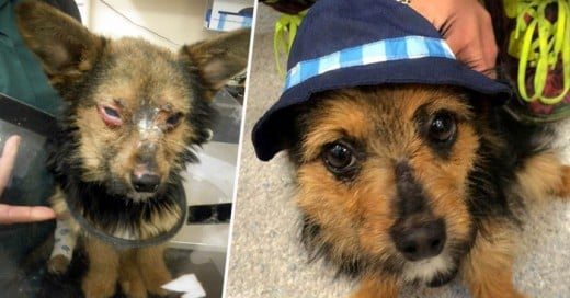 Historia del maltrato que recibió este inofensivo cachorro llamado Chunky