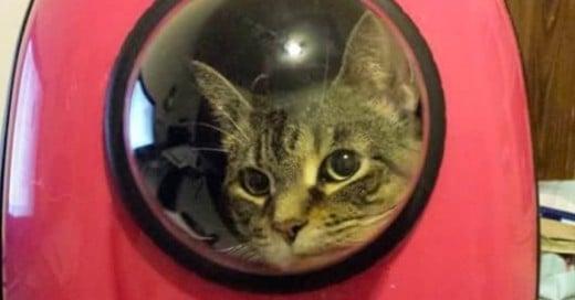Patent Bubble Pet Carriers crea estas mochilas para llevar a tu gato a donde quieras y con estilo
