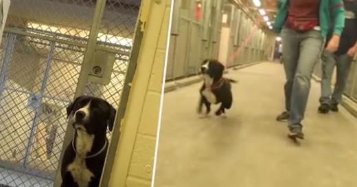 Benny es un perro callejero que tras ser rescatado de las calles