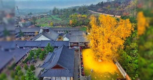 Un árbol milenario asiatico