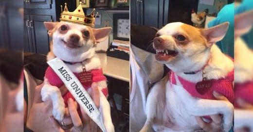 Los mejores memes por el #EpicFail en Miss Universo 2015