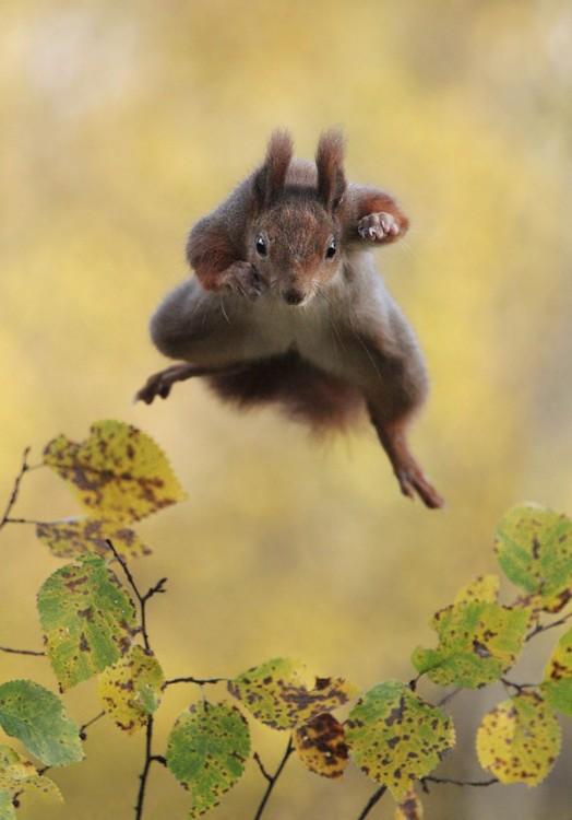 fotografía de una ardilla saltando