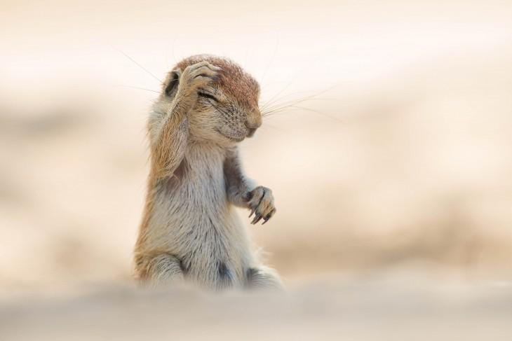 Fotografía de una ardilla tocándose su cabeza