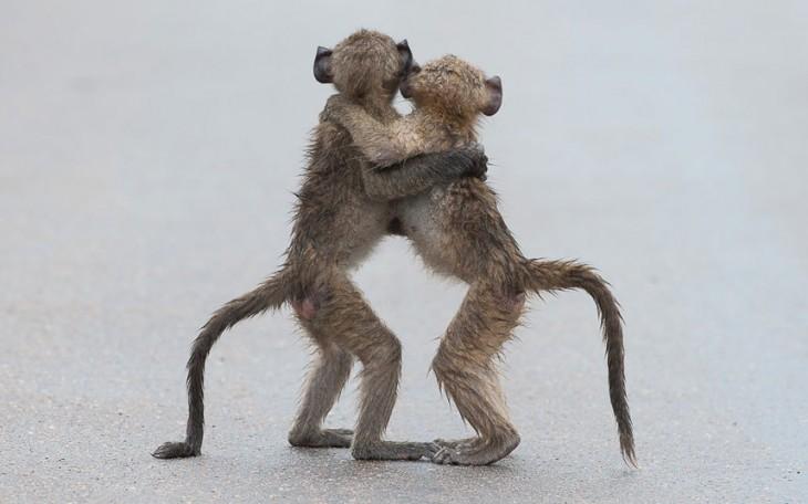 Fotografía 'último tango' por el fotógrafo Por tony Dilger
