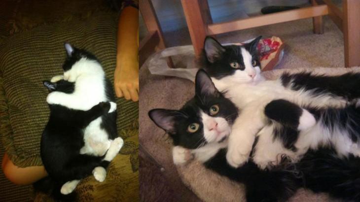 Foto del antes y después de dos pequeños gatos blanco con negro