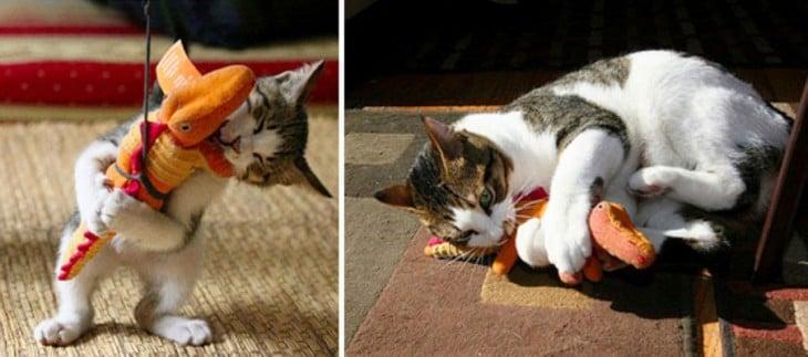 foto del antes y después de un gato jugando con un peluche