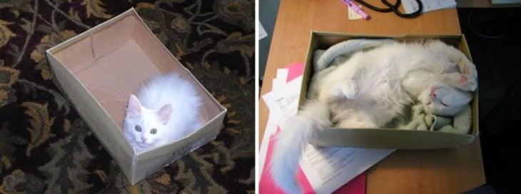 foto del antes y después de un gato dentro de una caja