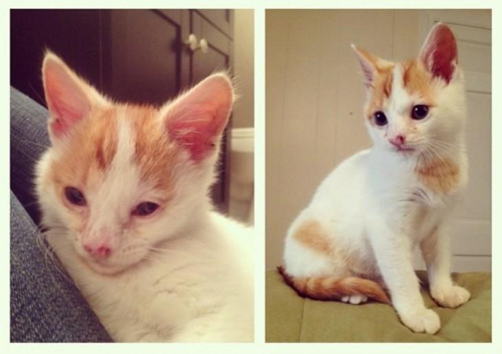 fotografía que muestra el cambio de un gato después de unos años