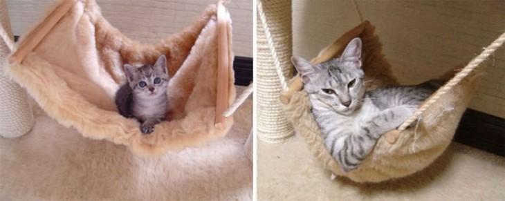 fotografía de un gato acostado sobre una cama de bebé y en otra de grande