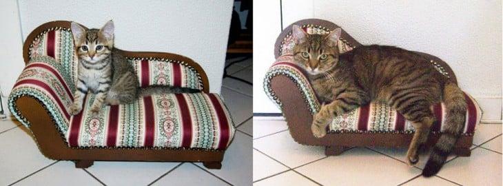 Gato acostado sobre un pequeño sillón en el suelo