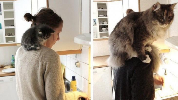 fotografías de un gato sobre el hombro de una chica que esta en la cocina