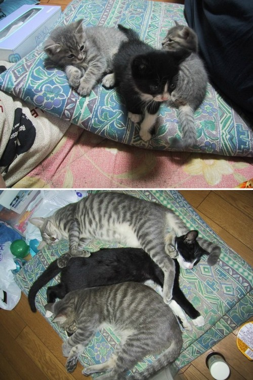 3 gatos sobre una almohada de pequeños y unos años después
