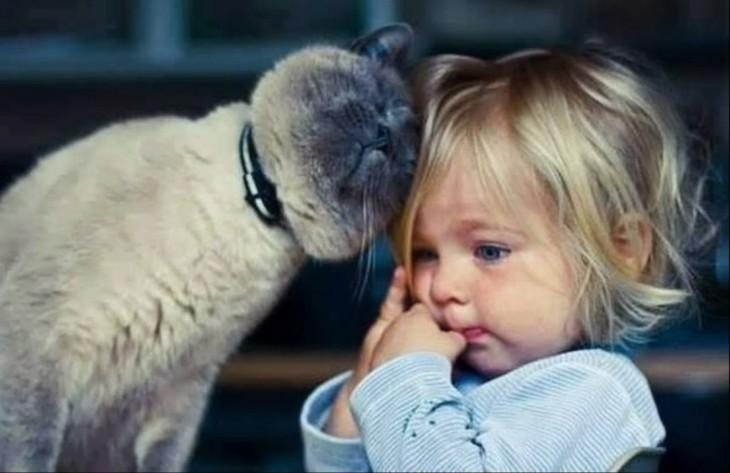 gato recargándose sobre la cabeza de una niña