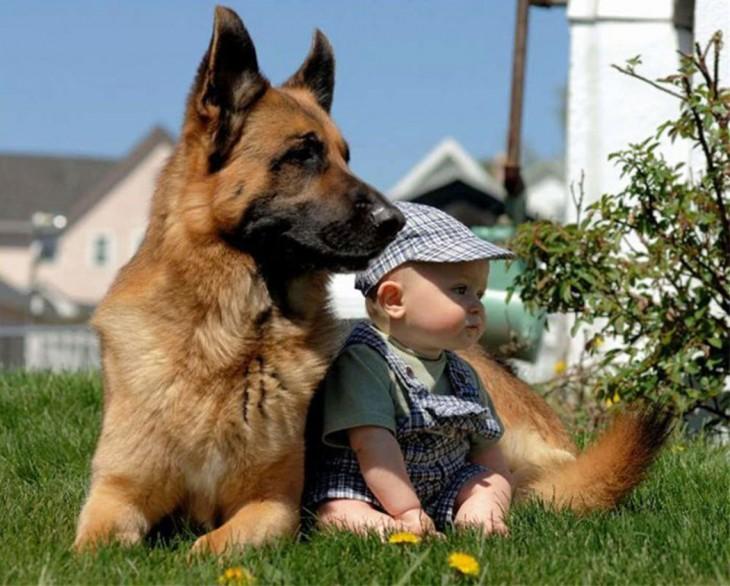bebé sentado frente a su perro pastor alemán