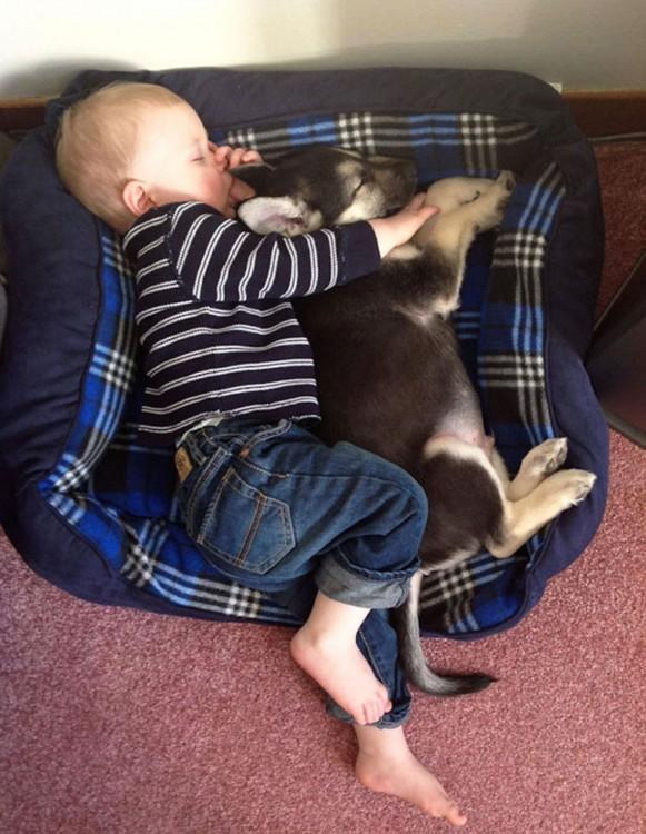 bebé dormido en la cama de su perro
