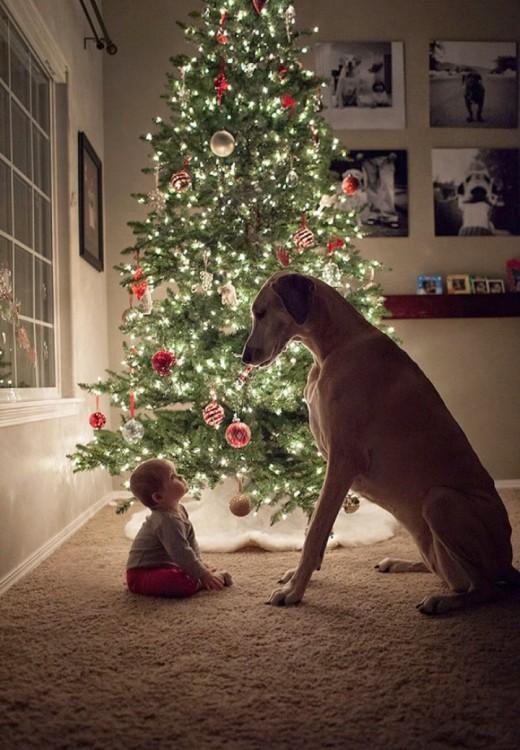 bebé sentado frente a su perro junto a un árbol de navidad