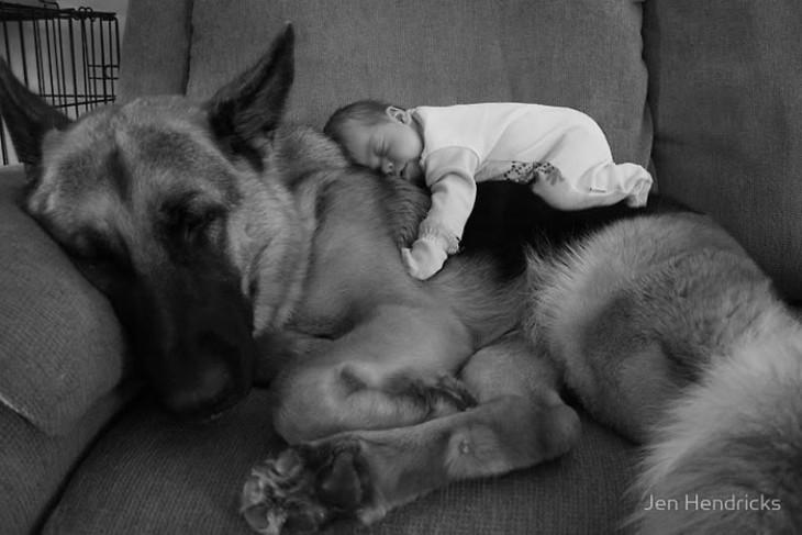 bebé acostado sobre su perro pastor alemán
