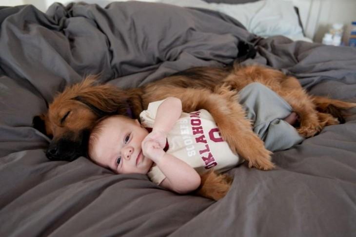 perro dormido abrazado de un bebé sobre una cama