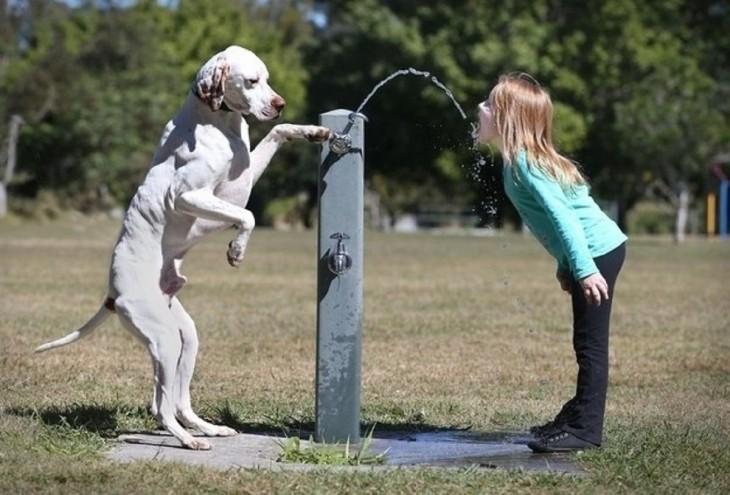 perro dando de beber agua a una niña
