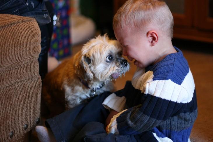 niño llorando frente a su pequeño perro