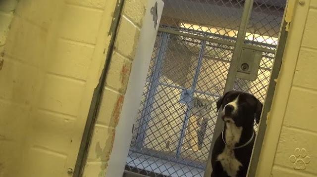Benny perro dentro de un refugio en California