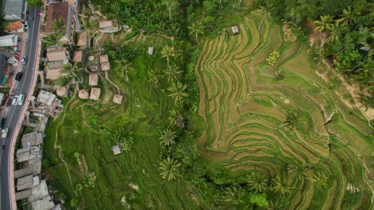 Terrazas de arroz Tegallalang, Bali