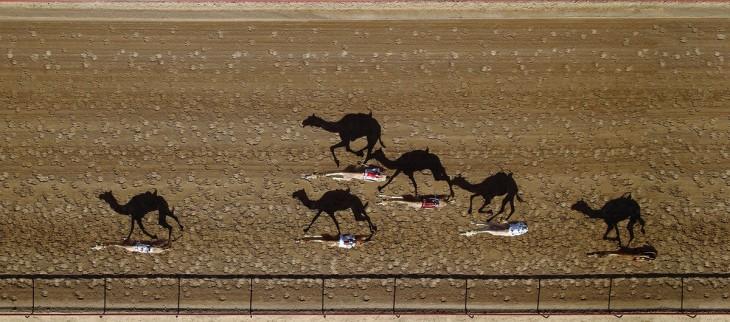 Pista de carreras de camellos Al Marmoun en Dubai