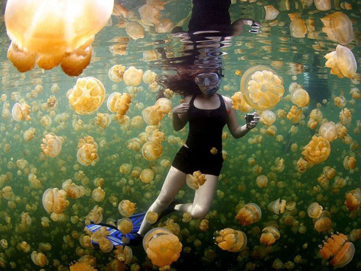 Gelatinas amarillas en Islas Chelbacheb, Oceanía fotografía por: Ciemon Frank Caballes