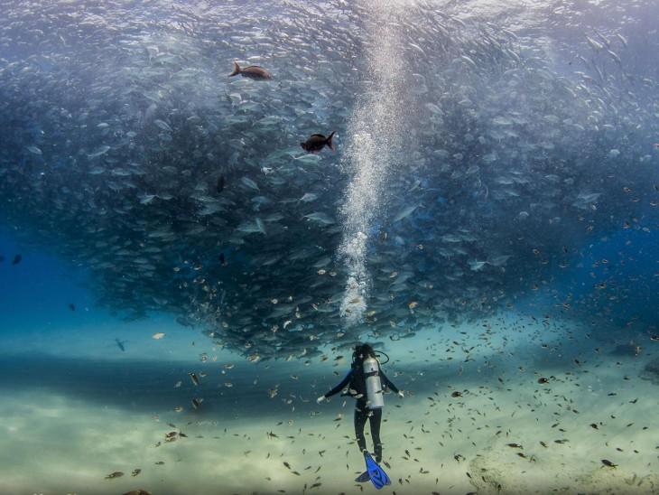 Todos los peces en el mar en Cabo Pulmo, México por Jeff Hester