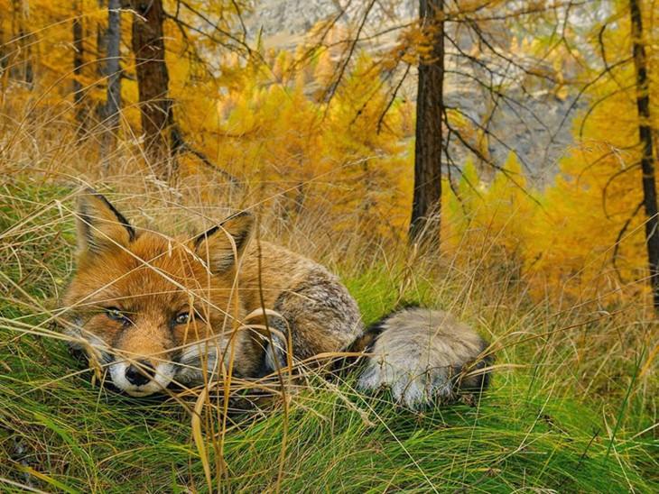 Fox Found fotografía por Stefano Unterthiner
