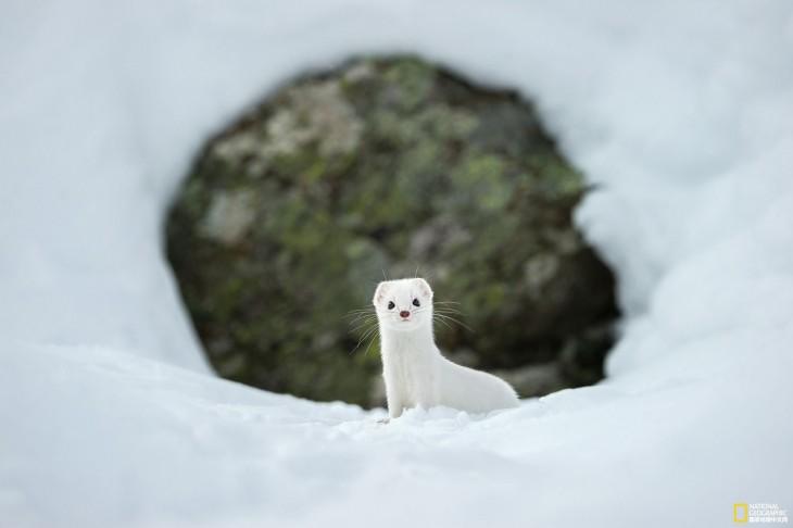 Invierno blanco en el Parque Nacional Gran Paradiso, Italia Por Stefano Unterthiner