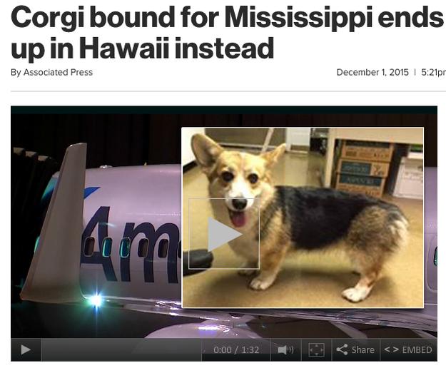 Corgi de Mississippi que se ganó unas vacaciones a Hawaii