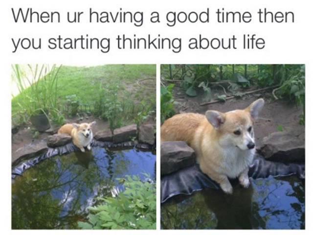 meme de un cachorro Corgi sentado a la oriilla de un lugar con agua