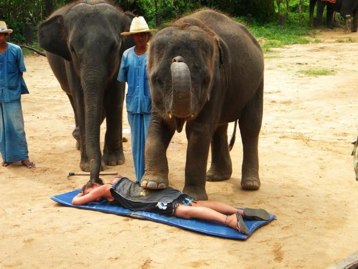 dos elefantes dando un masaje a una chica que esta en el suelo en Tailandia
