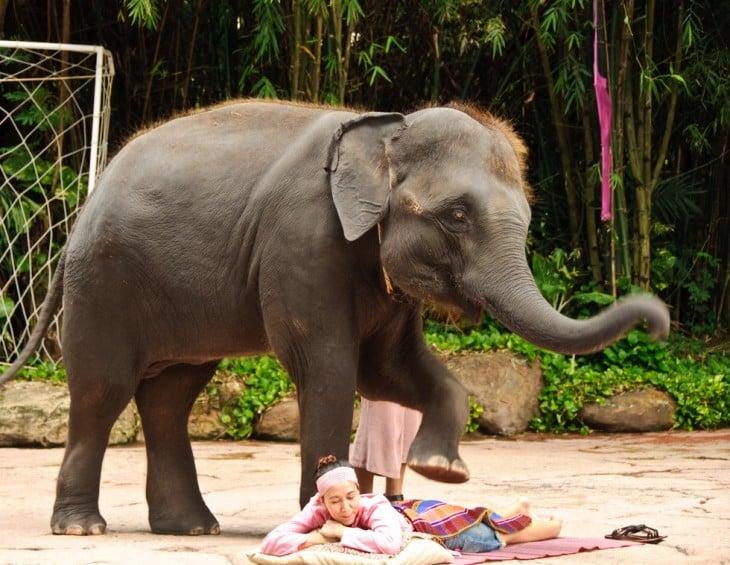 Mujer recibiendo un masaje por un elefante