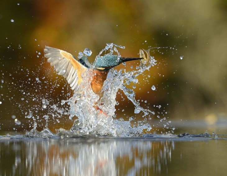 pájaro martín pescador con un pez en su pico