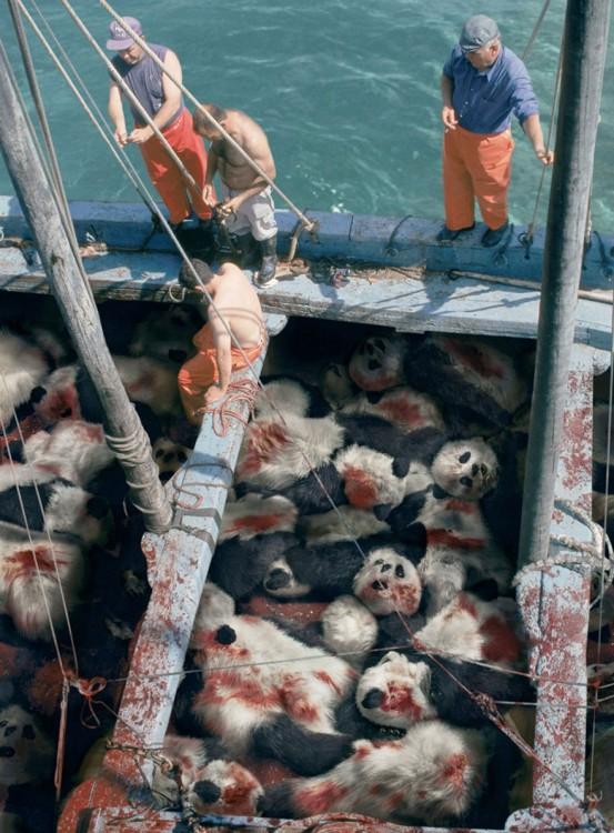 hombres en un barco con muchos pandas asesinados en el suelo