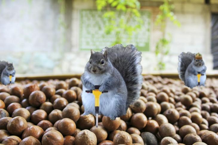 ardilla gorda trabajando en la fábrica de nuttela