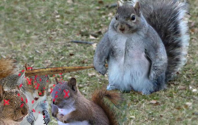ardilla gorda mata a las ardillas que se burlaban de ella por ser obesa