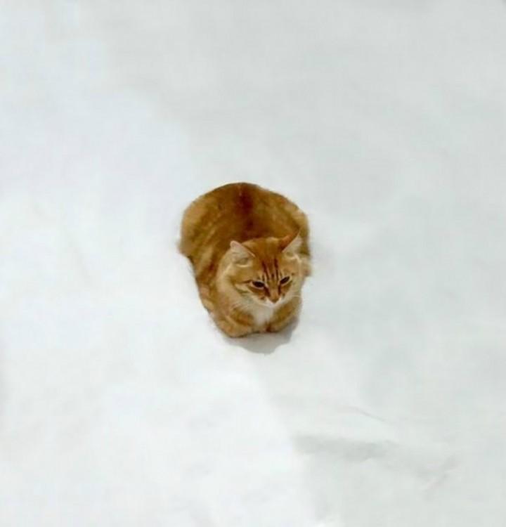 Gato acostado sobre sus patas recogidas